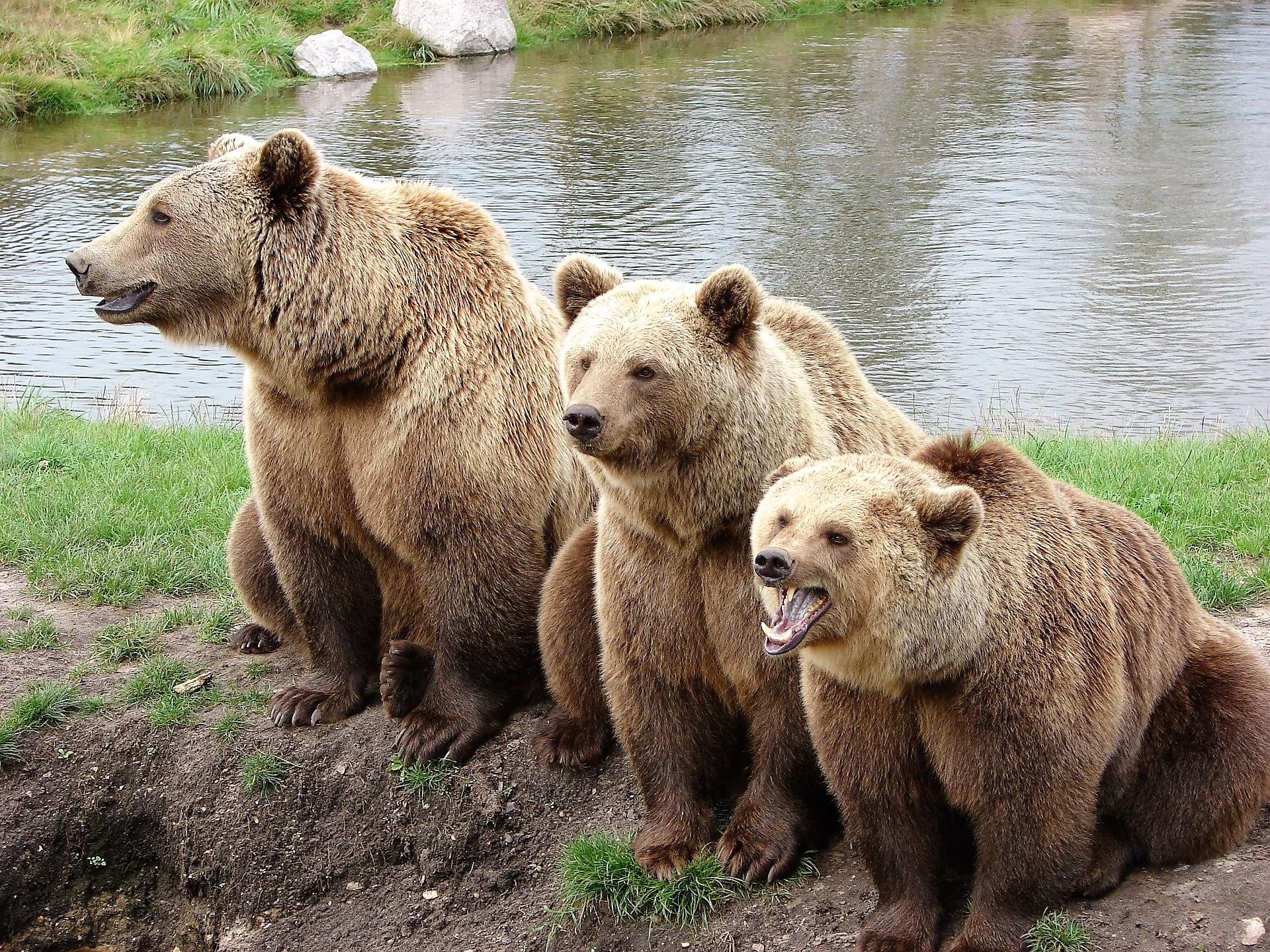 Leeuwen en beren MET ANDERE OGEN Blog van Nico Belo waarderend leidinggeven