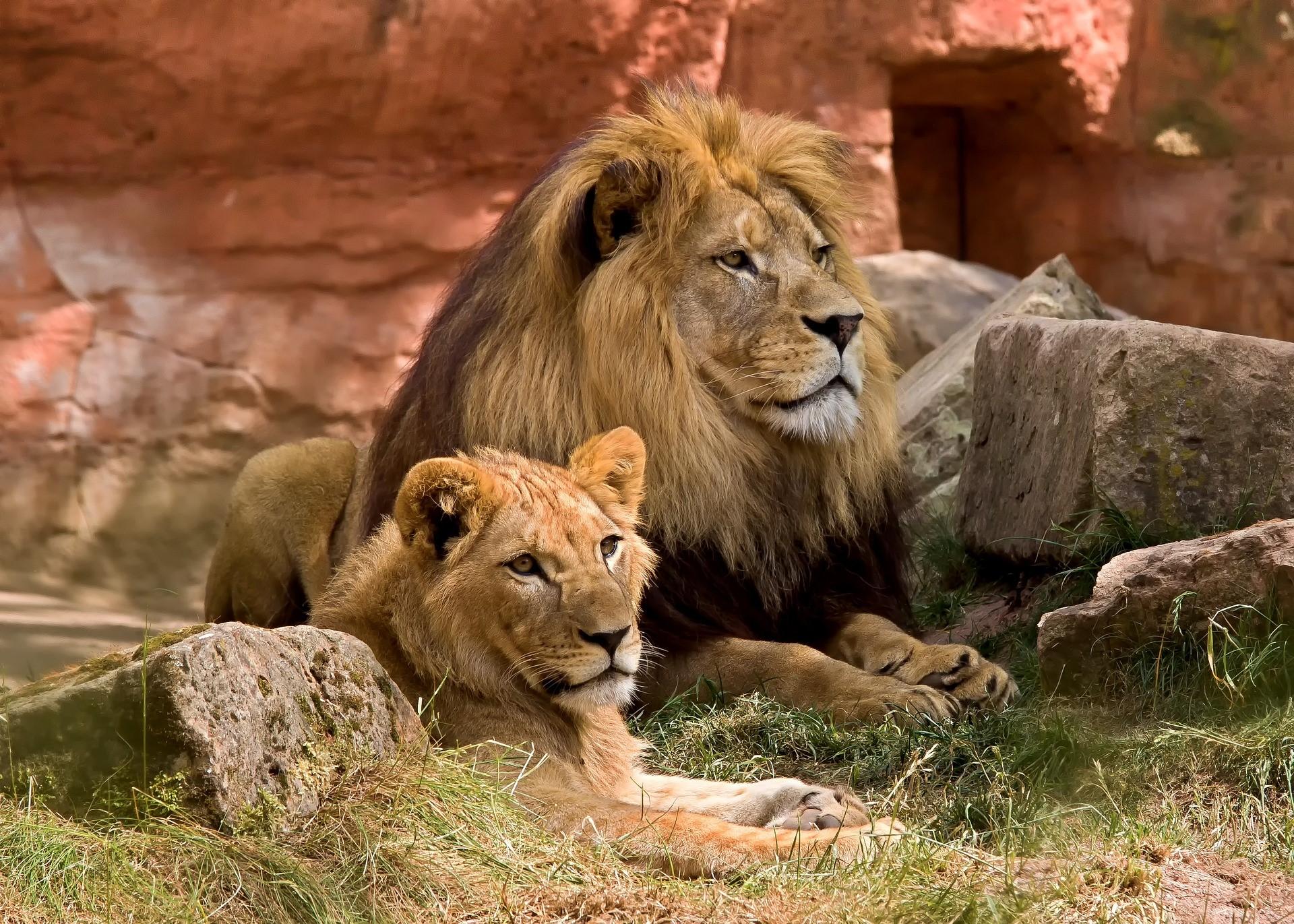 Leeuwen en beren MET ANDERE OGEN blog Nico Belo waarderend leidinggeven